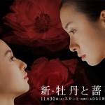 新・牡丹と薔薇|東海テレビ